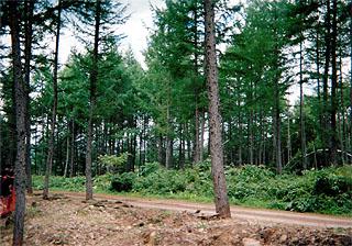 林道コース